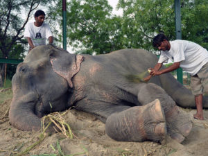 The Heart-Warming Story Of A Poor Elephant Who Was Rescued From His Cruel Masters